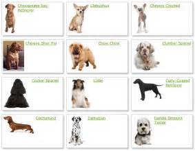 Breed And Co All List Of Different Dogs Breeds Breeds List With