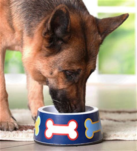 german shepherd food a shortcut to your own food doggie bistro