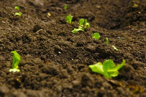 Organic Garden Soil Vegetable Garden Soil Organic Vegetable Garden Soil