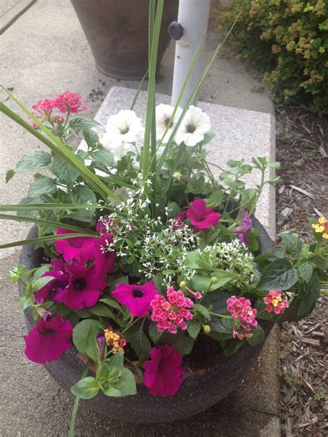 potted flowers for sun gardening