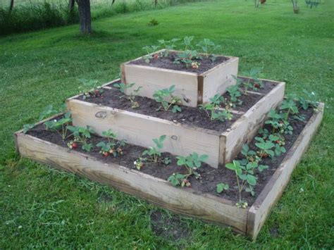 strawberry bed ideas van wie variety raised strawberry bed