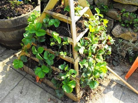 homemade planters homemade strawberry planter gardening pinterest