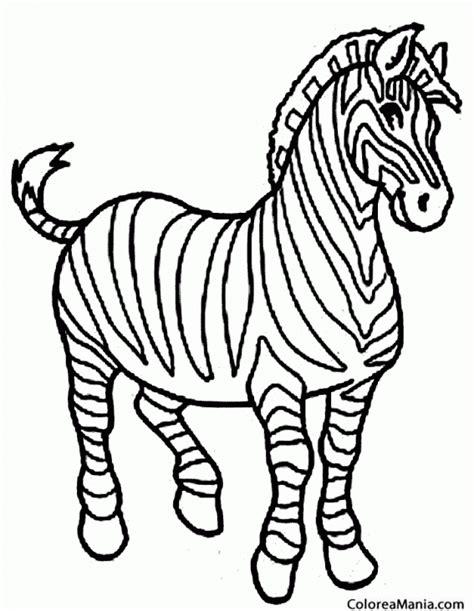 imagenes de cebras para dibujar faciles colorear cebra con bella crin animales de la selva