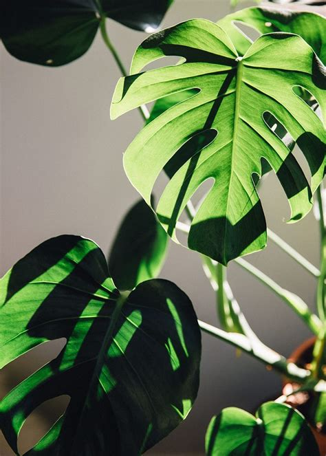 photo journal  oases   plant photography