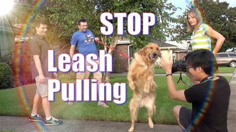 how to a not to pull when walking 17 best images about the how to self learning on