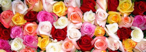 different colors of roses what the different colors of roses billy heromans