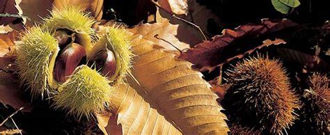 alimentazione dei ricci di terra daksy amici dei parchi naturali altoatesini il castagno