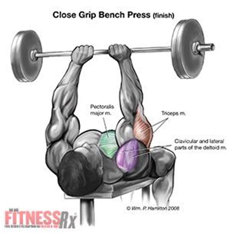 incline close grip bench the gallery for gt dumbbell bench press muscles worked