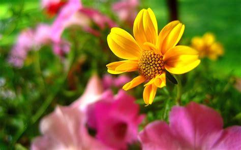 all best picos poze desktop flori buchete de flori all best picos poze desktop flori buchete de flori