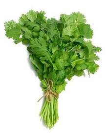 Vertical Gardening Vegetables - coriander pack of 100 seeds greenmylife anyone can garden