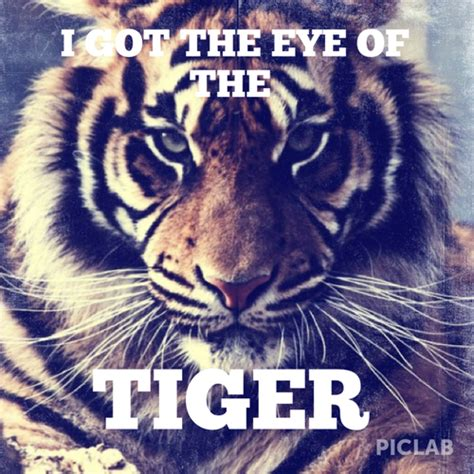 tiger quotes eye of the tiger quotes quotesgram