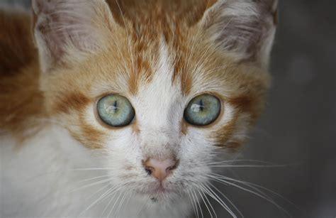 imagenes ironicas de gatos fotos de gatitos en ultramegahiper hd taringa