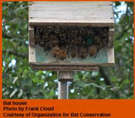 guide to get free bat house plans do it yourself build
