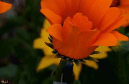 flower blooming blooming flower on tumblr