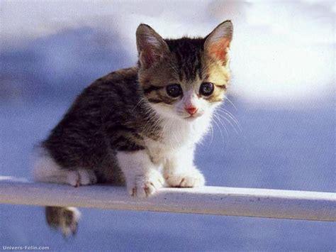 wallpaper chat mignon fond d 233 cran de chat chaton sur la rembarde