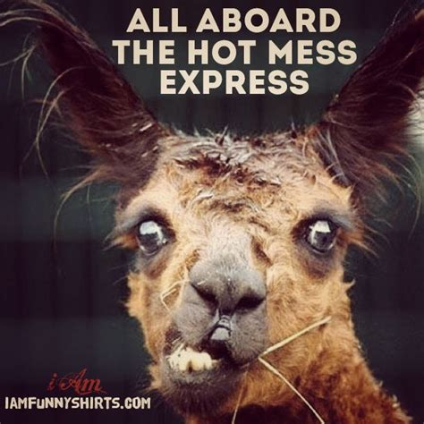 Hot Mess Meme - 13 best lama images on pinterest animals alpacas and