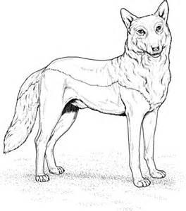 ausmalbild rotwolf kostenlos zum ausdrucken