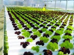 Garden Growing System Hydroponic Gardening In The Greenhouse Interior Design