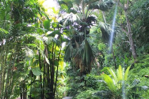 seychelles national botanical gardens seychelles national botanical gardens zdj苹cie