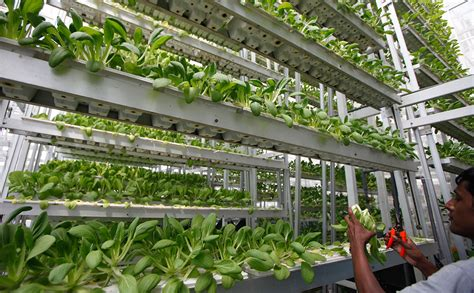 Vertical Garden Pictures - seniors and vertical farming together at last modern farmer