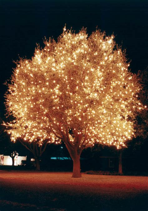 Holiday And Christmas Lighting Gallery By Landscape Led Lighted Tree