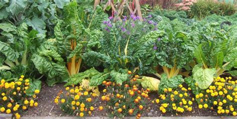 Companion Flowers For Vegetable Garden 5 Easy Ways To Create A Stunning Vegetable Garden