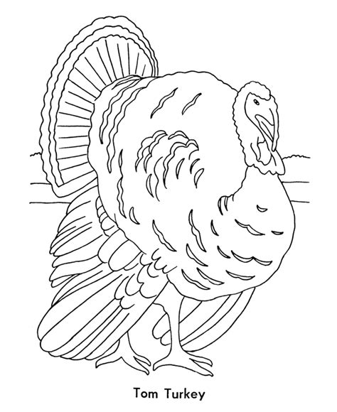 turkey coloring page outline thanksgiving turkey outline az coloring pages