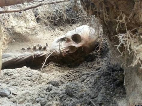 Backyard Excavation by Finds Ancient Skeleton In Backyard May To