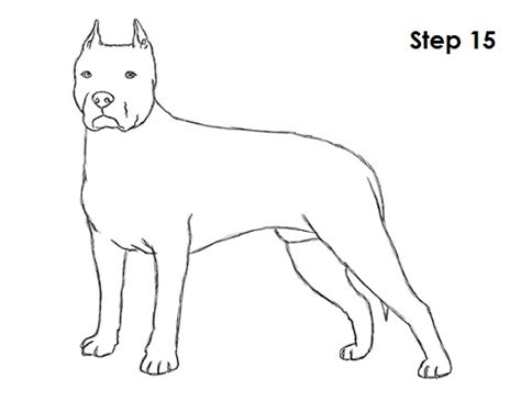 how to a pitbull puppy imgs for gt pitbull drawing