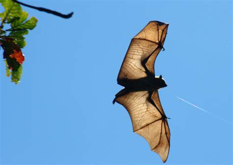 volpi volanti volpi volanti viaggi vacanze e turismo turisti per caso