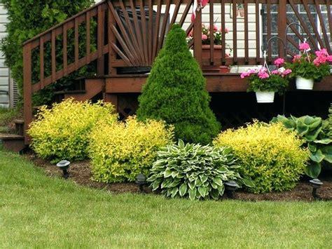 florida low maintenance landscaping bushes for landscaping