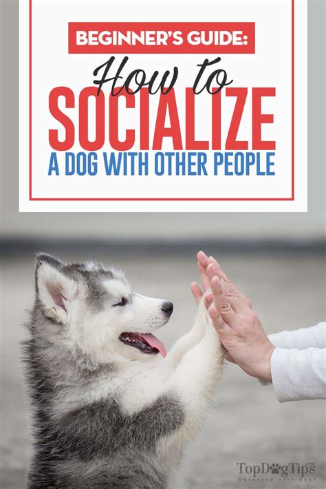 how to socialize an aggressive how to socialize a with humans a beginner s guide tasty pet foods