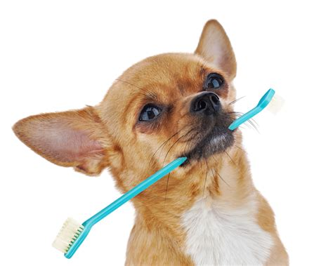 pets and dogs what are the best foods and treats for my pet s dental health clinical