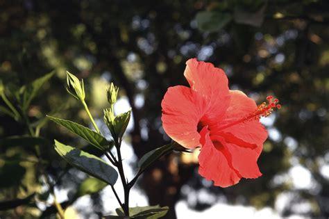 pflegeleichte pflanzen für den garten pflegeleichte pflanzen f 252 r den garten