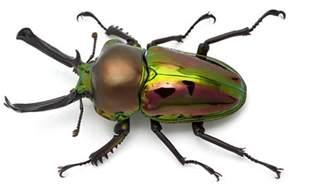 Bugs In The Backyard Educational Minibeast Programs Minibeast Wildlife