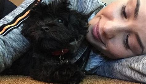 demi lovatos dogs tragic death new details about what demi lovato s new dog helps her heal after tragic loss