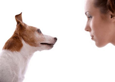 eye contact with dogs teaching your to listen with eye contact focus