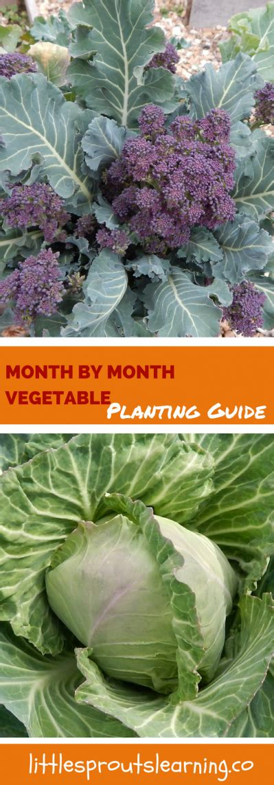 month by month vegetable garden planting guide