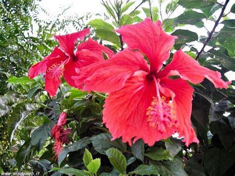 fiori per foto fiori per compleanno