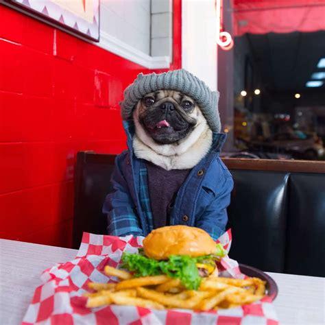 doug the pug instagram meet riverdale s most adorable canine fan doug the pug