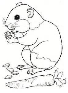 ausmalbilder 252 kinder hamster 3
