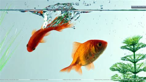 3d wallpaper water fish fish in aquarium closeup wallpaper