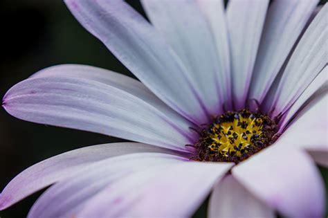 Cyntia New Syari Flower 1 flower baljinder gill flickr