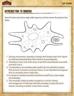introduction to amoeba free life science worksheet for