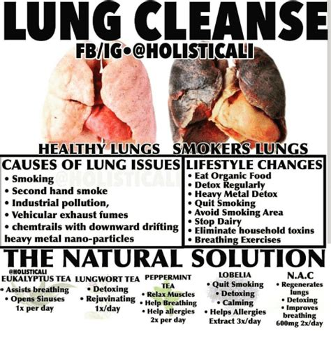 Heavy Smoker Detox by Lung Cleanse Fbigcoholisticali Healthy Lungs Smokers Lun