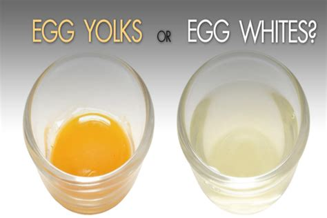 protein 3 egg white egg protein yolk or white