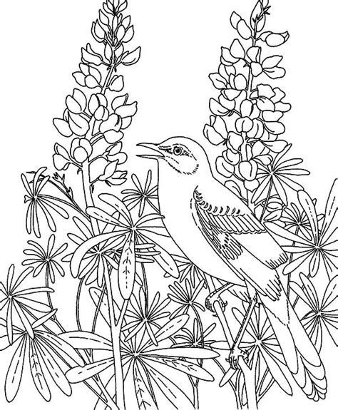 Flower Garden Coloring Pages For by Flower Garden Coloring Pages Educational Coloring Pages