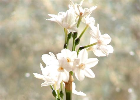 fiori in inverno free fiori in inverno stock photo freeimages