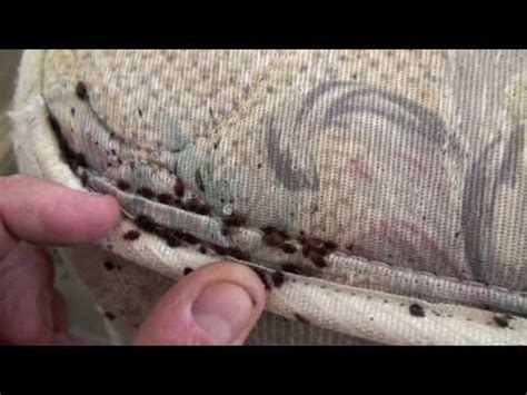 bed bugs in apartment who pays bedbug hotel complaint pdf free programs utilities and
