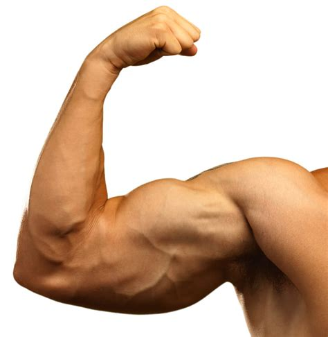 Bilder Arm by Arms Workout Add An Inch To Your Arms In 21 Days